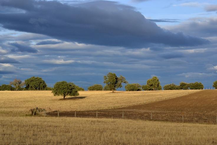 Final de septiembre - Castilla la Mancha (España)