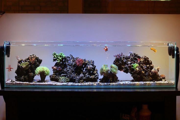 Rimless aquarium club page 52 reef central online - Petit aquarium design ...