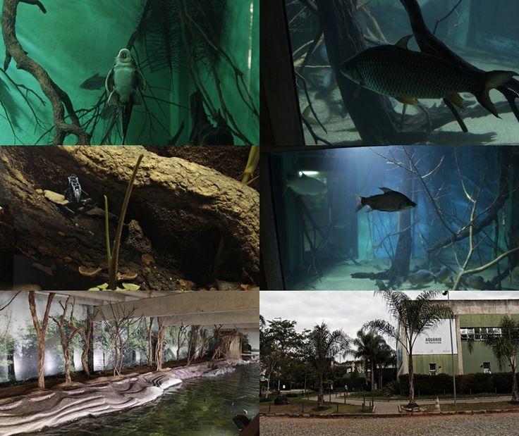 Peixes diversos  do Aquário da Bacia do Rio São Francisco, localizado dentro do Zoológico de Belo Horizonte.