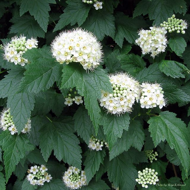 331 best images about best pnw native plants on pinterest