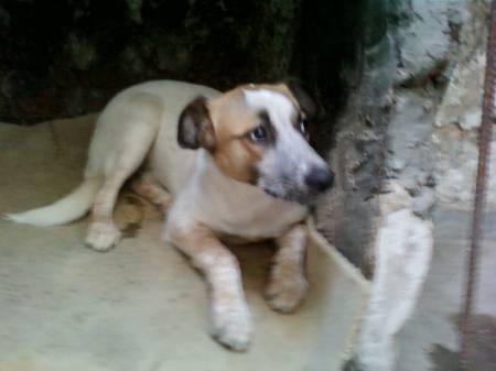 ¡Hermosa Perrita en adopción publicada en Vivavisos! http://adopcion-mascotas.vivavisos.com.ar/adoptar-dar-mascota+nunez/perrita-blanca-doicl-en-adopcion-urgente-----/49799843