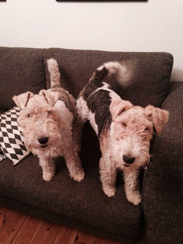 66 besten My Diertjies Bilder auf Pinterest   Tiere, Hund und ...