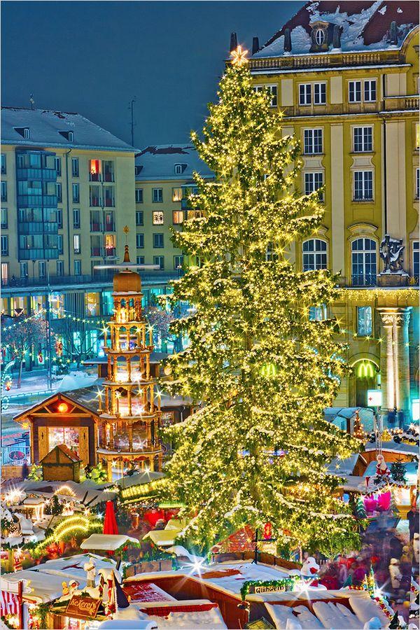 The christmas tree in Dresden /Striezelmarkt