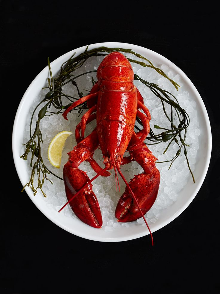 lobster at the Ordinary