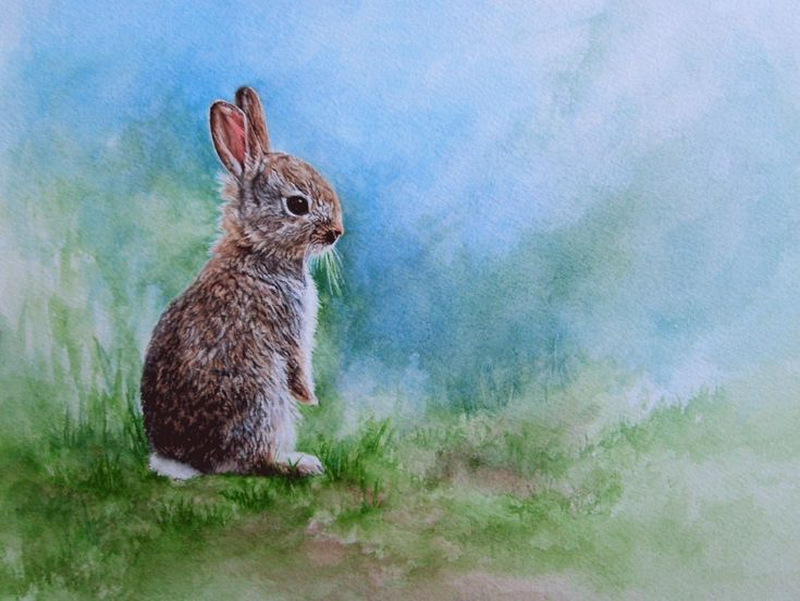 1000+ images about Rabbits on Pinterest | Snow bunnies ...
