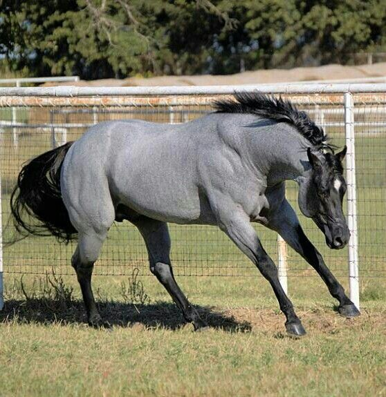 * *> A horsefly can't do a horse much damage, but it can drive it wild anyway. [Horse flys can be hideous in that the Bot horse fly will land on the skin and if not flicked off, in its' early stage, will leave a larvae that burrows into the skin and begins living off the muscle tissue of the animal. If not noticed, it can cause a red wound around it which is a opportunistic site for infection as the larvae grows.
