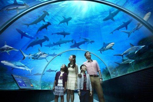The S.E.A. Aquarium™ is the world's largest aquarium. Sebuah pengalaman yang luar biasa melihat keindahan laut yang seakan2 ikut menyatu di dalam nya #SGTravelBuddy