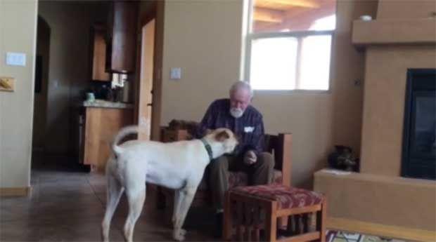 Η τρυφερή σχέση ενός σκύλου με το αφεντικό του που πάσχει από Αλτσχάιμερ (video) http://bit.ly/1nTFChr