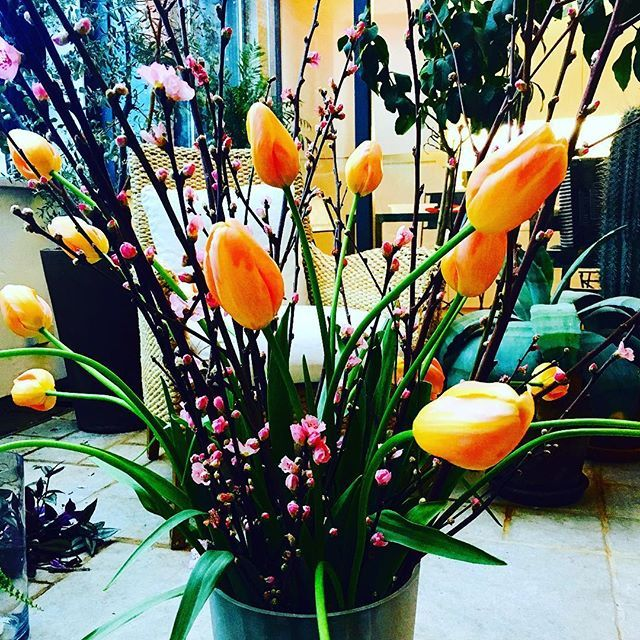 【micaelbindefeld】さんのInstagramをピンしています。 《Pretending spring is here with a huge bouquet of cherry blossoms mixed with giant French orange-pink tulips!!! Brightens up a gloomy Monday and lights up my indoor terrace!! #spring #earlyspring #latewinter #springisintheair #vårvinter #vårblomma #bouquet #vårblommor #frenchtulips #franskatulpaner #cherryblossom #cherryblossoms #kvistar #rosablommor #körsbärsblom #körsbärsblommor #cheznous》