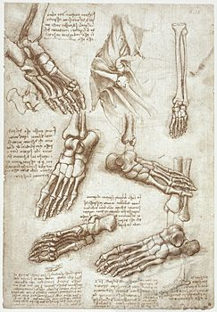 Anatomy Studies: The Bones of the Foot & Anatomy of the Shoulders by Leonardo da Vinci