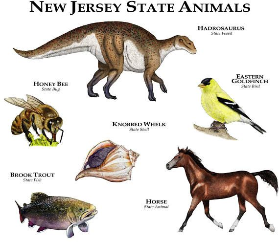 New Jersey State Animals Poster Print Etsy In 2020 Animal Posters Animals North American Wildlife