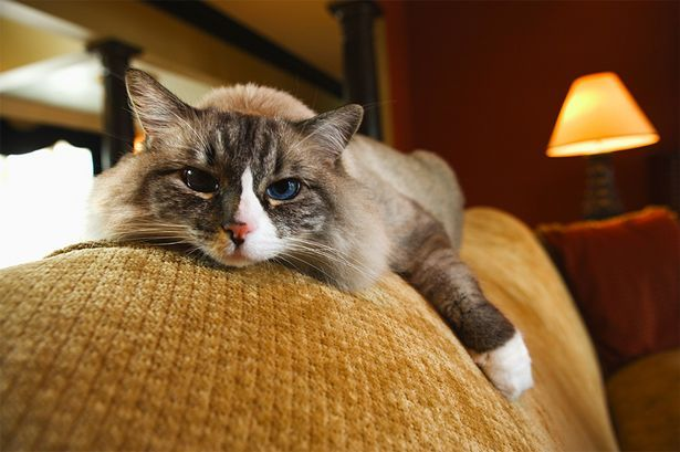 When you gotta go, you gotta go...and sometimes you just can't wait for the litter box! Learn how to get rid of the smell of cat urine from furniture.
