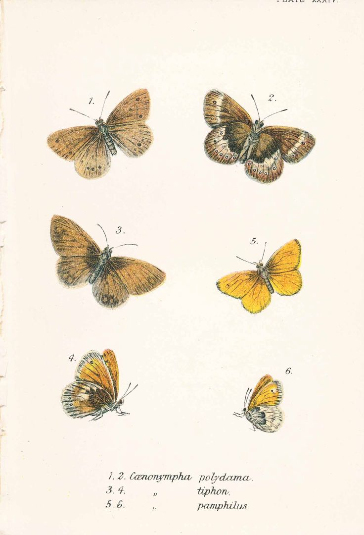 Victorian Butterfly Print, Art, Housewares, Small Butterflies, Nature, Antique Print by PeonyandThistlePaper on Etsy https://www.etsy.com/listing/193428218/victorian-butterfly-print-art-housewares