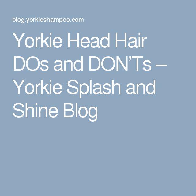 Yorkie Head Hair DOs and DON'Ts – Yorkie Splash and Shine Blog