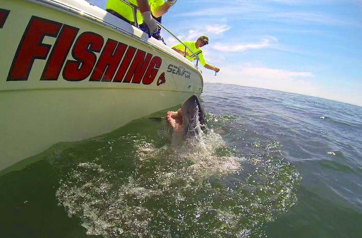 Did someone say Shark? That's a big fish! #SharkConservation #StAndrewsSportFishing