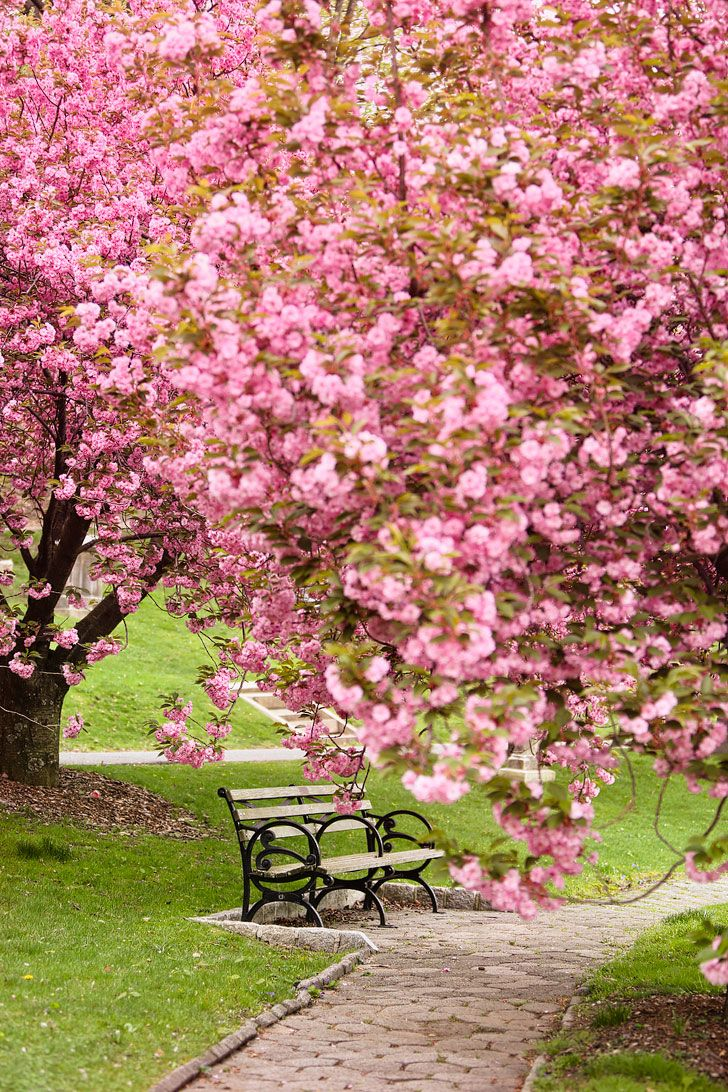 Best Places To See Cherry Blossoms In Nyc Nyc Tourist Attractions Cherry Blossom Beautiful Nature