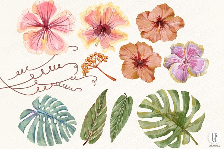 Watercolor hibiscus flower monstera by GrafikBoutique on Creative Market