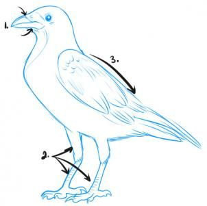 how to draw a crow step 1