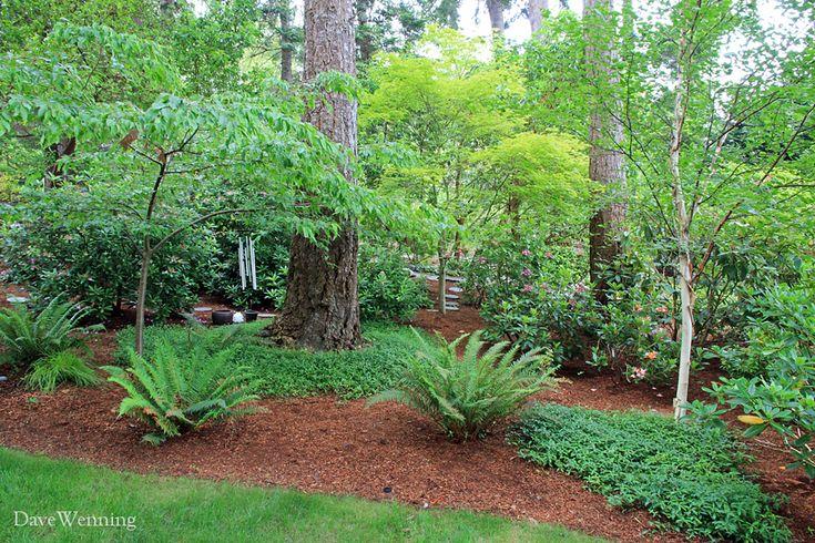 Best 25 Evergreen Garden Ideas On Pinterest Evergreen