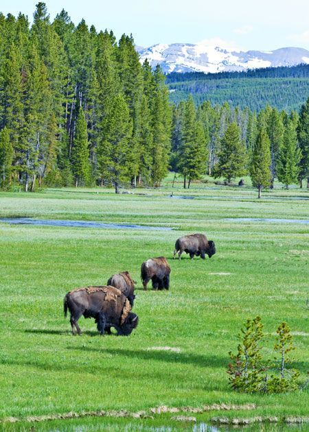 Tips for camping and hiking in Yellowstone National Park (WY)