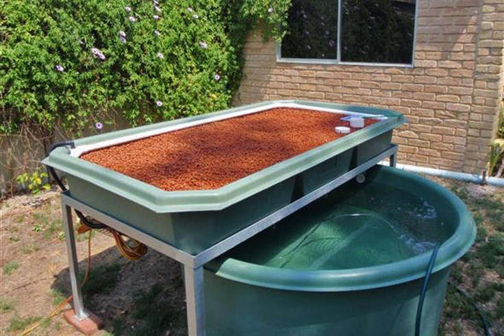 109 best aquaponics images on pinterest for Garden pool aquaponics