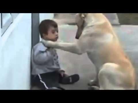 Este vídeo mostra o verdadeiro amor de um cão. - http://youtu.be/f3iVPMll9Yg