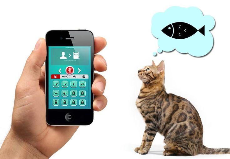 Лучшие гаджеты для котов и кошек - petterest.net