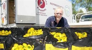 Partners Mick and Ross Sims Accreditated Growers have been growing and suppling gold button squash to chain stores and local markets for 20 years , and the transporting of refrigrated produce for local growers for six years