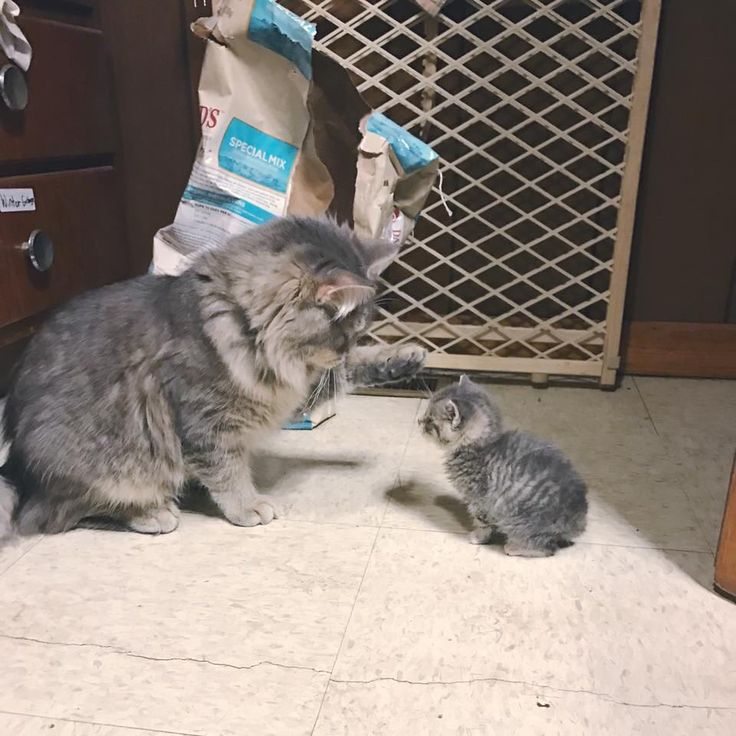 Nutz isn't too sure about the bottle feeding baby