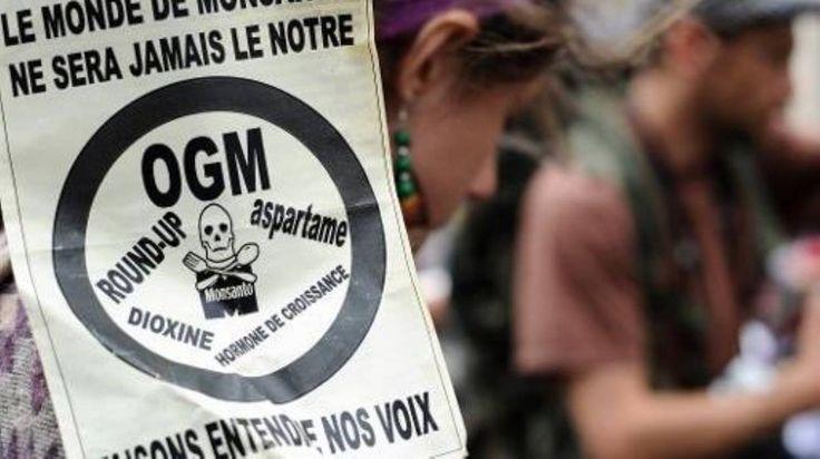 OGM: le Parlement européen recale la Commission, et Monsanto vise la France