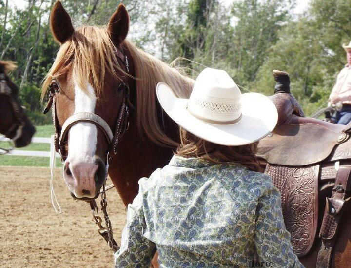 Horse, cowgirl, chesnut, western
