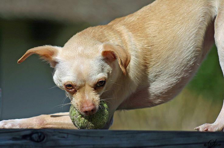 kom niet aan mijn bal!