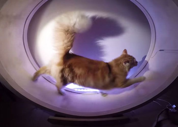 Kuna's Wheel: Our Hamster Wheel For Cats