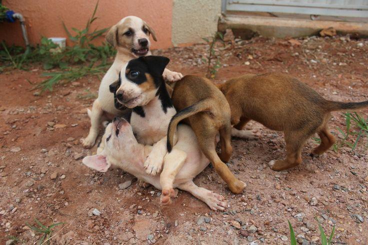 Cachorrinhos.
