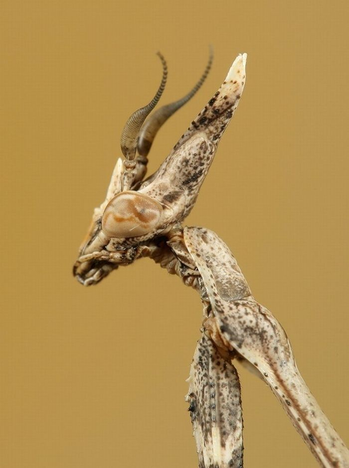 one  more, i'm obsessing right now.  Mantis