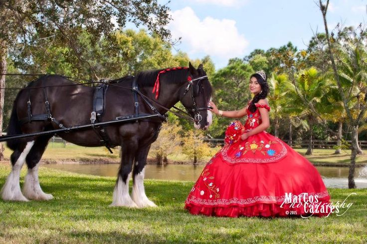Horse and Carriages Hire for Weddings and Events Covering  all of Florida