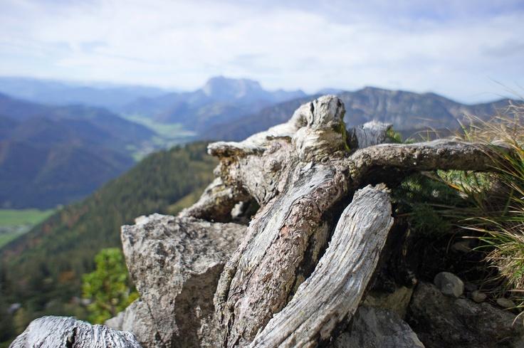 Am Gamssteig an der Steinplatte-Südwand
