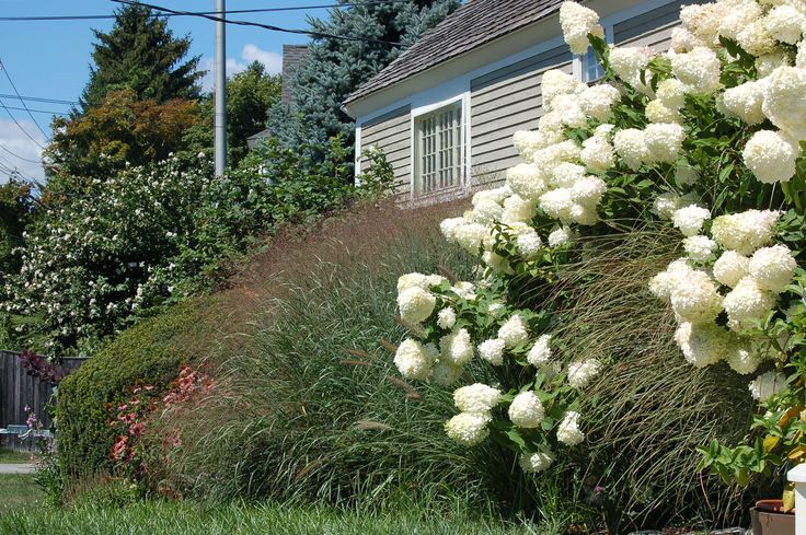 These homeowners created a sense of privacy in their landscaping by using hydrangeas, ornamental grass, and coneflowers. Looking for ideas to make your yard more private? Check out this article: http://landscaping.about.com/cs/hedgesfences/a/privacy_fences.htm