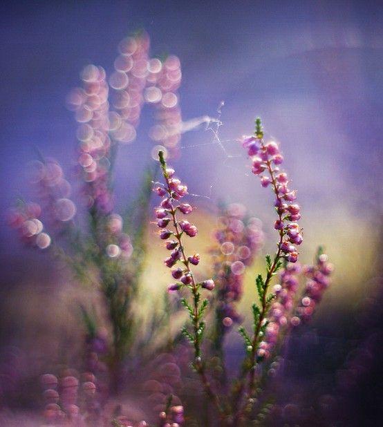Photography inspiration #pink #bokeh #macro