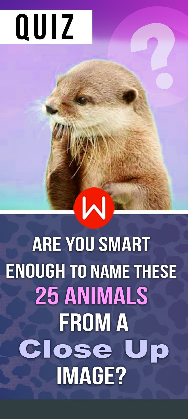 Trending Animal Quiz Ideas On Pinterest Spirit Animal Test - 25 intelligent animals world