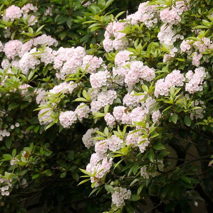 . . カルミアのお花がこんなに大きくなること . . 秘密の花園に必要な要素のこと . 新緑の銀杏がこんなにも美しいこと . そして…江ノ島の夕陽  息を飲むくらいキラキラだということ . 初めて見るもの 知ること いっぱいの旅でした . . 楽しかった旅のキロク5  これでおしまい . . お付き合いくださってありがとうございます 月曜日 さて、頑張ろうかな~ . . . #旅のキロク #横浜 #江ノ島 #花撮り人 #花園 #花フォト #旅は楽しい #旅人 #また行きたい場所 #一眼レフ初心者 #ファインダー越しの私の世界 #風景 #カメラ女子 #写真好きな人と繋がりたい #花好きな人と繋がりたい #旅好き #yokohama #flowerslovers #flowers #travel  #japan_of_flowers #japan_of_insta #fadingbeauty http://gelinshop.com/ipost/1519978696801631383/?code=BUYDJJRBbyX