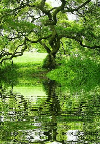 Decent Image Scraps: Nature Animation