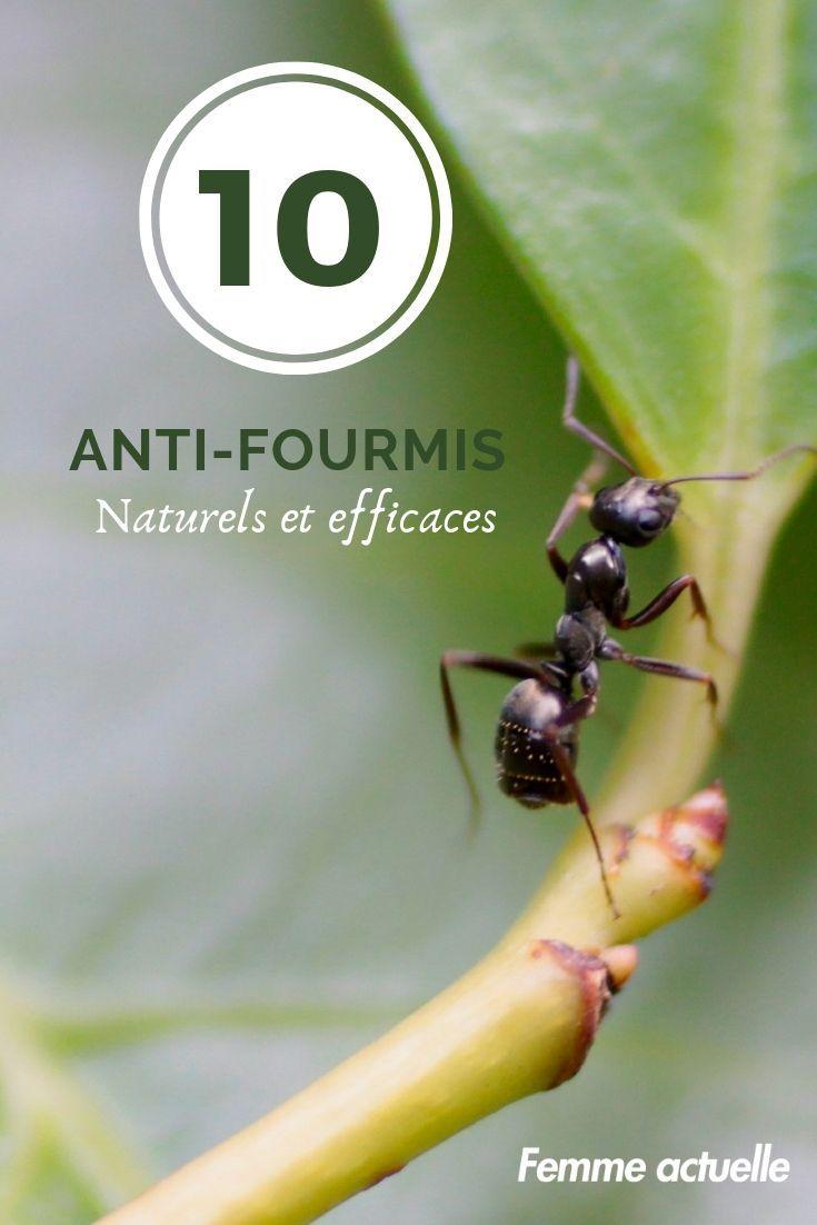 Bicarbonate De Soude Contre Les Pucerons jardin : 10 anti-fourmis naturels et efficaces | anti