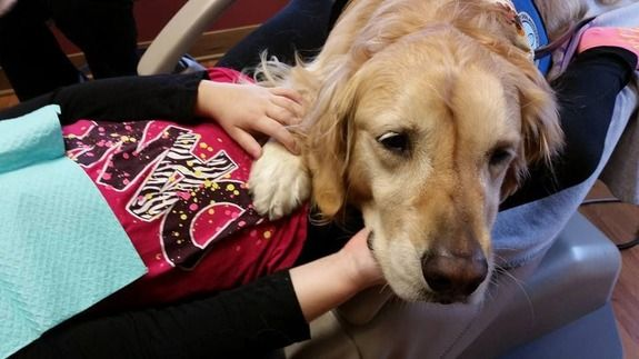 """JoJo the Golden Retriever is Your Ideal Dental Assistant ƺƺƺƺƺ """"A lot of the patients who normally were very apprehensive about even walking in the door now look forward to their appointments,"""" Renteria told The Dodo. """"The moment you walk in, you feel very relaxed. There she is, waiting for you to pet her."""" - AOL"""