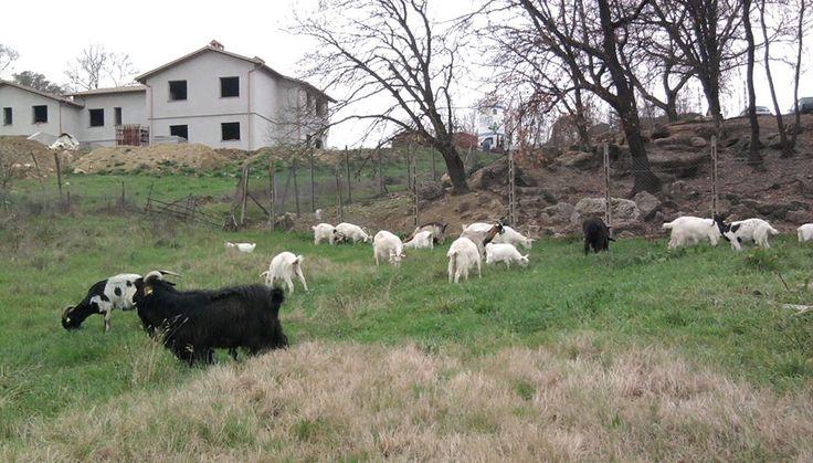 Azienda Agricola L' Albero degli Struzzi - Allevamento