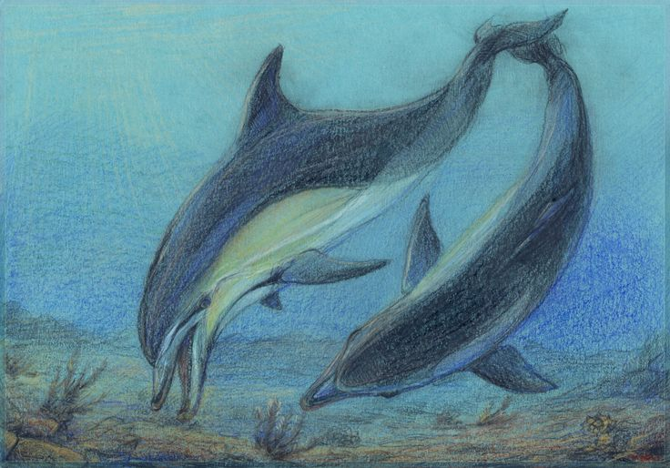 Black Sea Common Dolphins