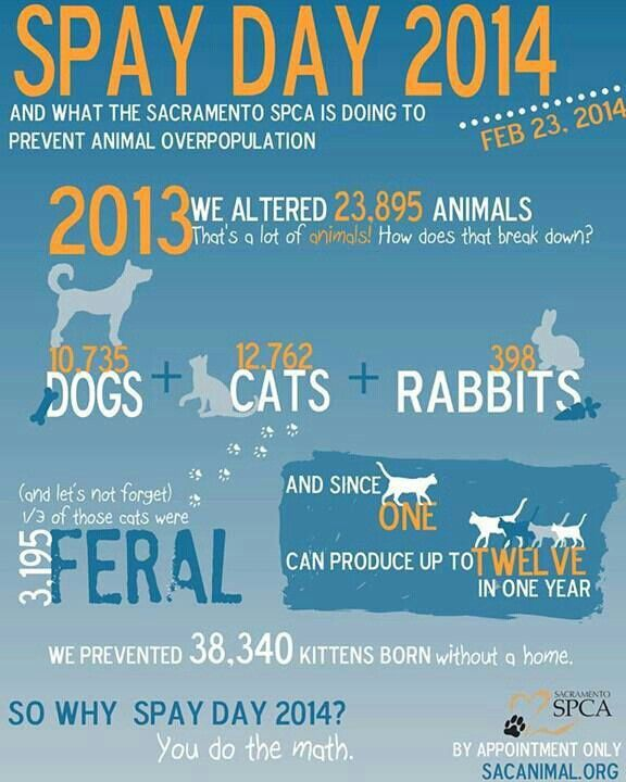 Cost Of Spaying A Dog In Ontario