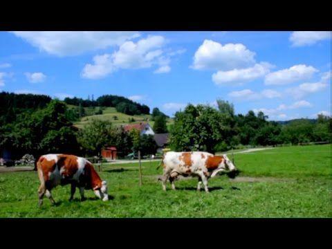 Kauf ne Kuh » Iss weniger Fleisch - und wenn, nur gutes und zurückverfolgbares