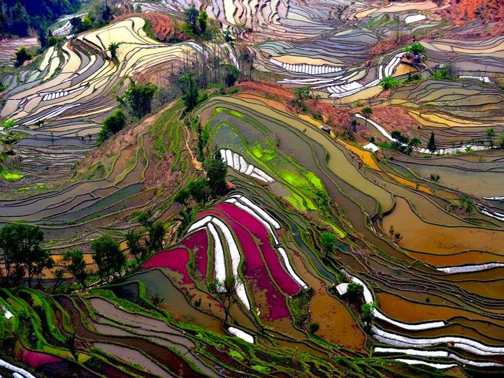 Terrace Rice Fields in Yunnan, China    To see some of the most beautiful rice terraces in the world, head to Yunnan. China.