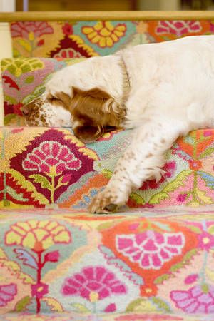 Dash & Albert - sold!: Field Of Flowers, Interior, Dogs, Albert Rugs, Color, Carpet, Dash And Albert